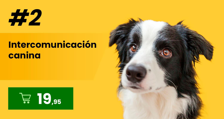 Intercomunicación canina